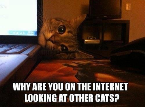File:Othercats.jpg
