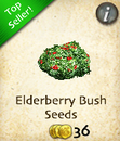 Elderberry Bush Seeds