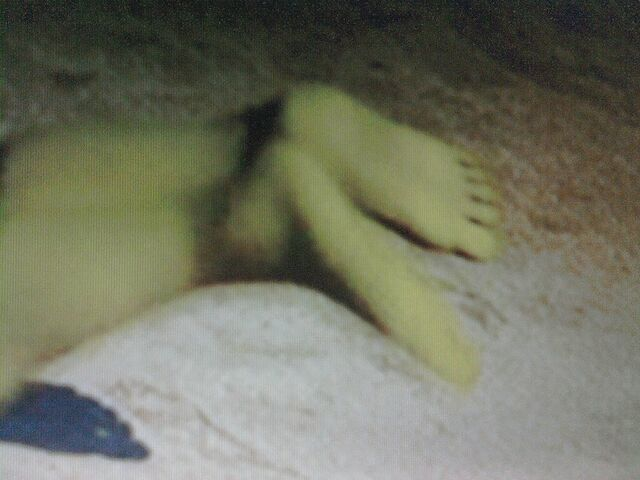 File:Fiona's Feet 1 .jpg