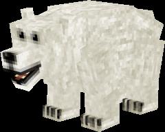 Display Polar Bear