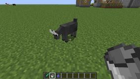 Male Goat Milked