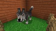 New wolf model