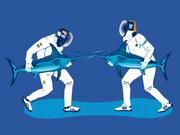 Swordfish Fencing1ubDetail