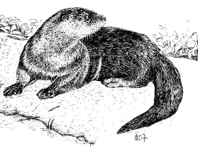 File:Otter1.jpg