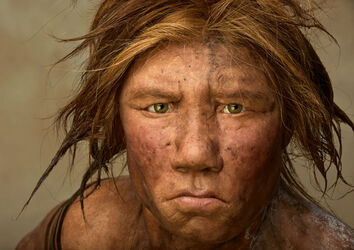 Neanderthal-615