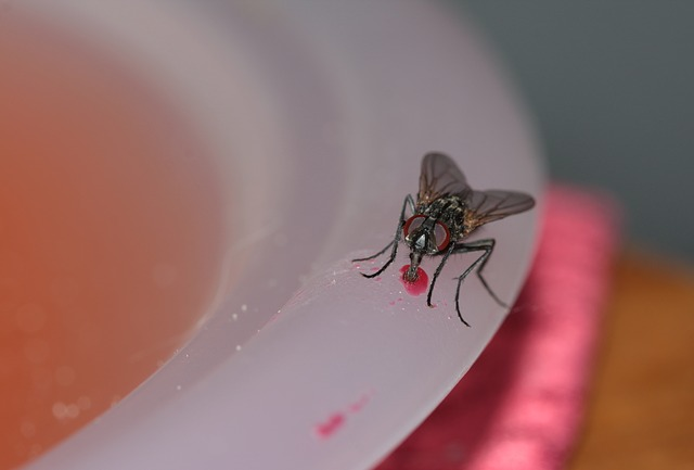 File:Common-house-fly-328648 640.jpg