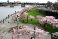 Governor Tom McCall Waterfront Park, Portland wikipedia duran duran radio festival 1