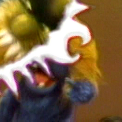 Part of the performer's head is shown on the bottom right of the screen whois performing Little Chrissy.