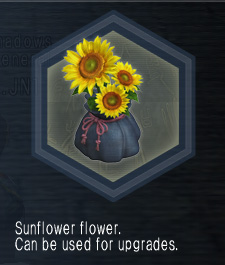 SunflowerFlower