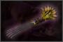 Phoenix Talon (DW4)