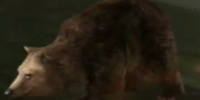 Bear Saddle