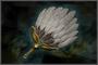 Warlord Fan (DW4)