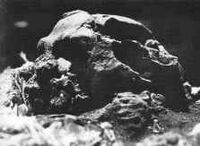 Creb skull