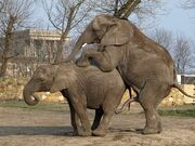 3833816-elephants-love-1