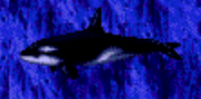 File:Orca.png