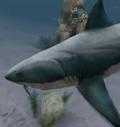 Great White Shark (DOTF)