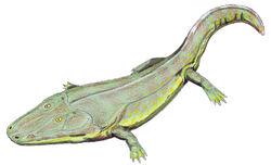 Cyclotosaurus2