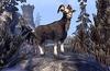 Sanguine's Black Goat