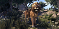 Pride-King Lion
