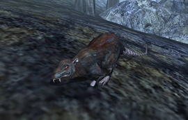 Rat (Morrowind)