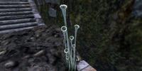 Fungus Stalk