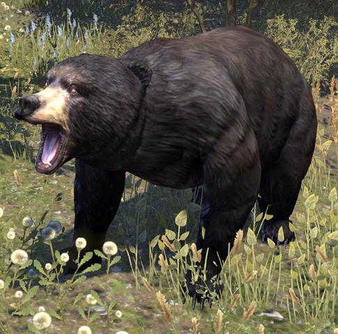 File:Black Bear.png