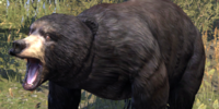 Bear (Online)