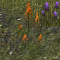 Mountainflower.png