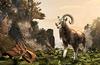 Dragontail Goat