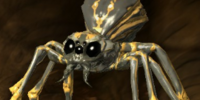 Oil Spider (Scroll)