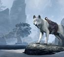 Ice Wolf (Mount)