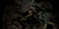 Black Lichen