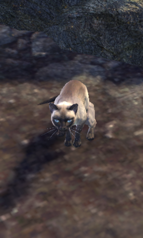 File:Star the cat.png