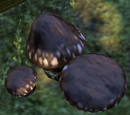 Luminous Russula (Online)