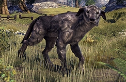File:Windhelm Wolfhound.png