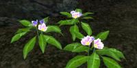 Primrose Leaves