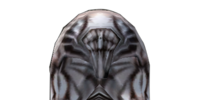 Imperial Silver Helm