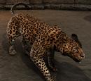 Pit Beast