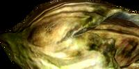 Cirripede nordico