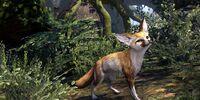 Fennec Fox (Pet)
