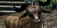 Goat (Skyrim)