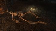 Endarre Skeleton