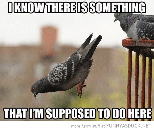 File:Funny-bird-pigeon-falling-know-something-supposed-to-do-here-pics.jpg