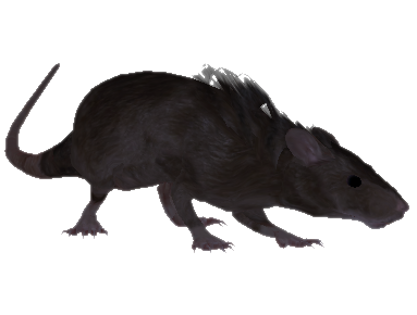 File:Oblivion Rat.png