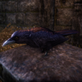 ESO Crow.png