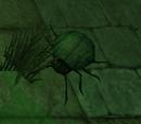 Plagued Beetle