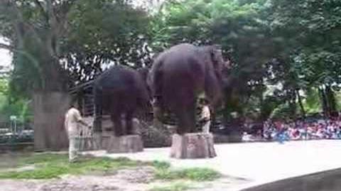 Elephant show at Melaka Zoo