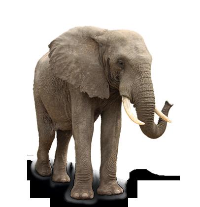 Datei:Elefant1.png
