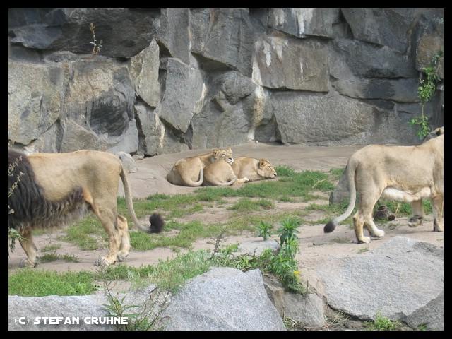 Datei:Tierpark Berlin3.jpg
