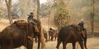 Arbeitselefanten
